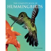 hummingbirds-of-north-america, bird feeder, unique bird feeders