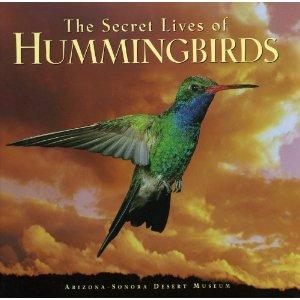 hummingbirds-of-north-america, bird feeder, unique bird feeders