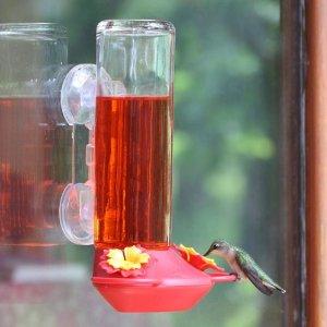window bird feeders for hummingbirds