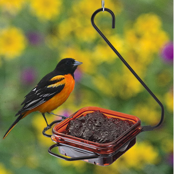 hanging oriole bird feeder